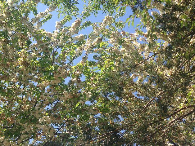 arbres en fleurs parc martin luther king paris
