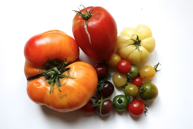 tomates thierry riant